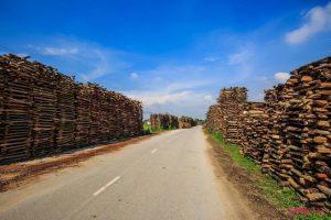 Con đường dẫn vào làng gốm Phù Lãng bao quanh là những chồng củi khô được xếp vuông vắn